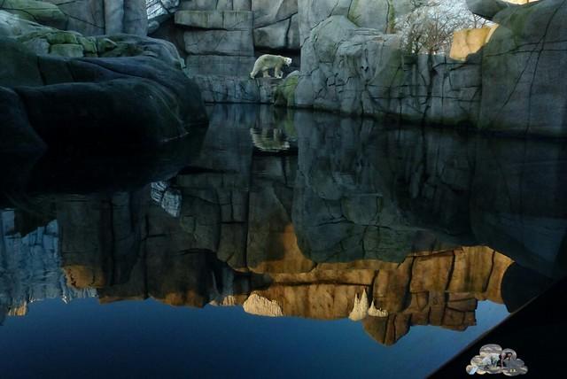 Tierpark Hagenbeck 17.114 _wm
