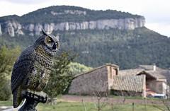 El vigilant...de pedra