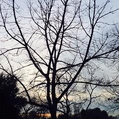 8 January 2015 #sunset #samespotforayear