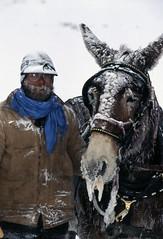 donkey(1.0), mule(1.0), winter(1.0), pack animal(1.0),