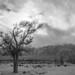 Manzanar Despair by tourtrophy