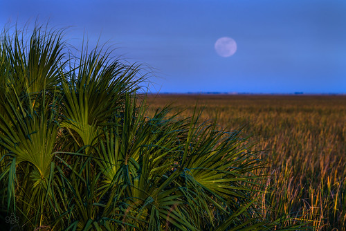 december unitedstates florida fortlauderdale sawgrassrecreationpark fullmoonrise uscopyrightregistered2013