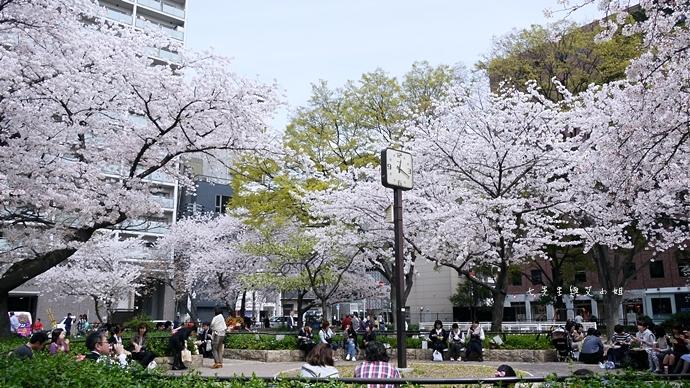 14 大阪賞櫻景點 堀江公園 味處和風亭