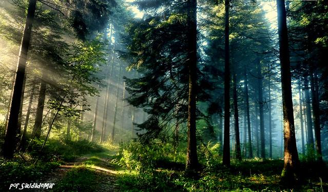 Siempre aparece una luz que nos da la salida...
