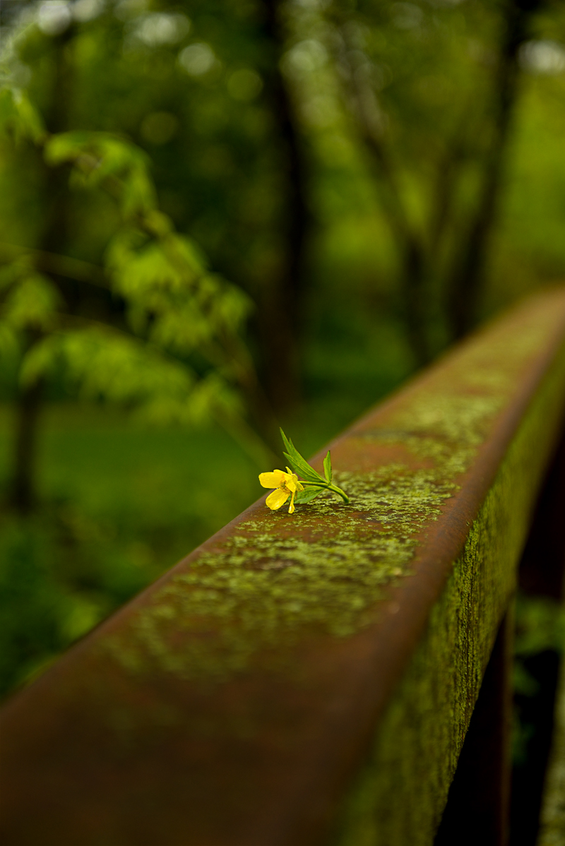 FloweronBridge-800PX-SimiJois-2016
