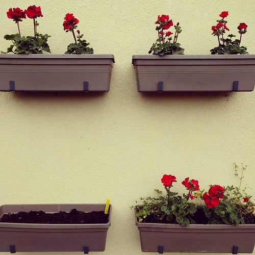 Die middag op het terras. 🌸 Ik zou enkel geraniums zetten en wat radijzen zaaien. Het werden radijzen, sla, wortels en lente-ui... 😇 #geranium #balkontuin #balkontuinieren #indenhof
