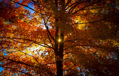 new autumn england sunlight tree fall cemetery leaves ma colorful massachusetts woburn