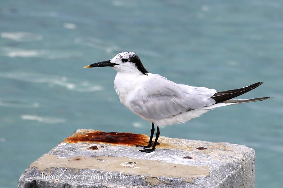 091514_bird20