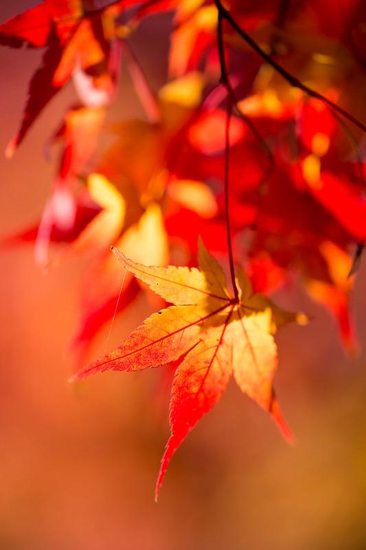 秋が燃える