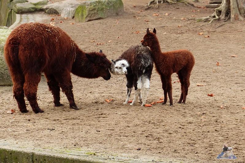 Zoo Berlin 07.12.2014 2
