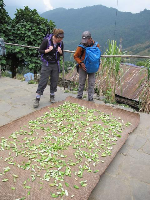 Annapurna Trek: Day 6 Chuili to Chomrong