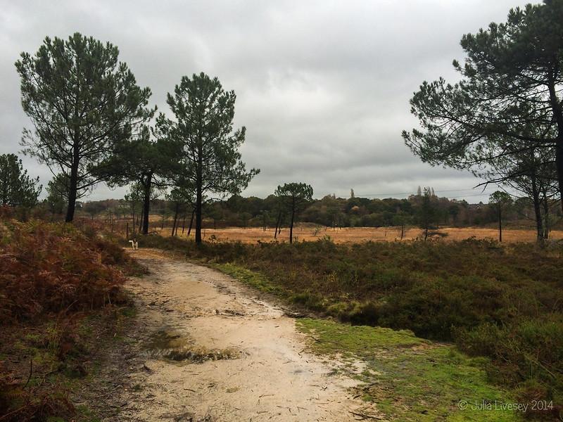 Another damp walk on Upton Heath