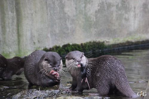 Zoo Berlin 11.01.2015 30