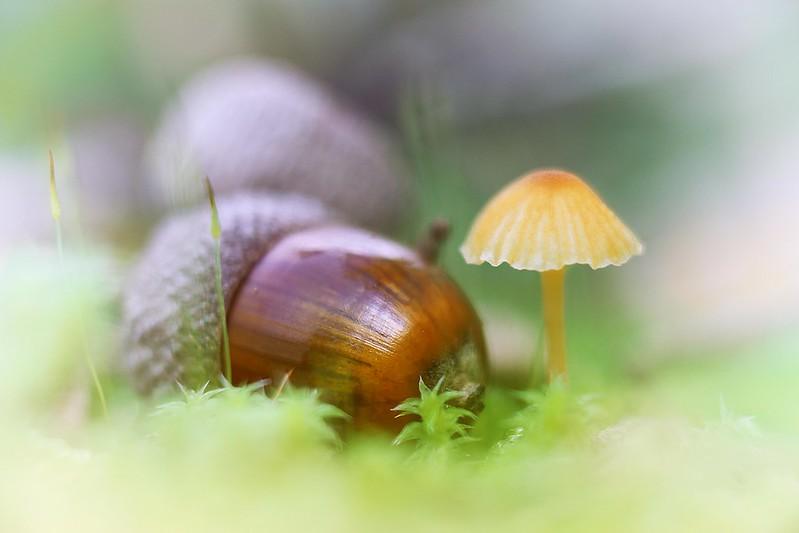 scene with an acorn