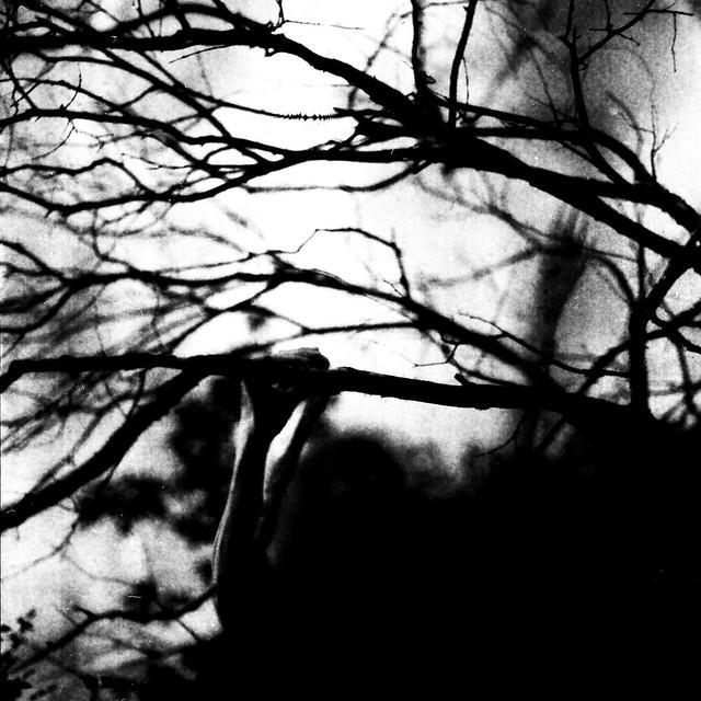 Tunguska RdM - Alice climbs de tree of memory and life