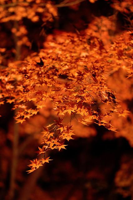 Garden Nocturne - 3