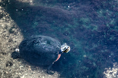 Turtle at Castaway Point Park