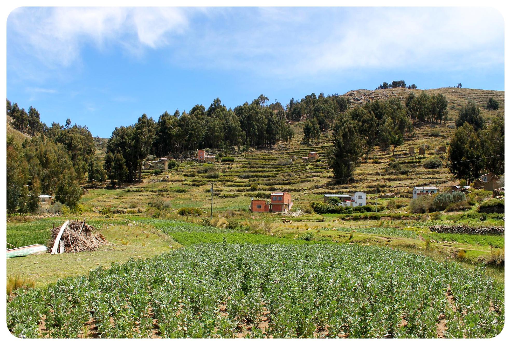 lake titicaca fields