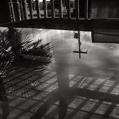 Reflection on a patio table! #reflection #tree #shadows #blackandwhite #blackandwhitephotography @eduardontavares