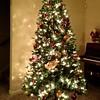 O Christmas Tree 2014