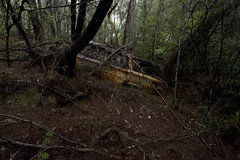 Dumped car