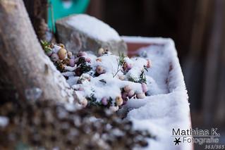 Schnee | Projekt | Tag 363