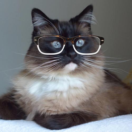 Bean_Glasses_4
