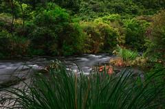 Stream @ Wainuiomata Reservoir