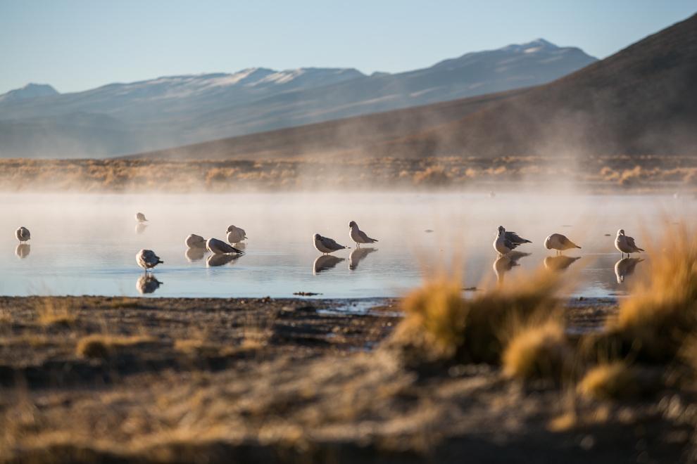 La laguna Chalvirí está escondida entre las alturas de la Cordillera de los Andes, en el rincón más suroccidental de Bolivia, se encuentra en la Reserva Nacional de Fauna Andina Eduardo Avaroa, el área protegida más visitada del país, con por lo menos 30.000 visitantes al año. (Tetsu Espósito)
