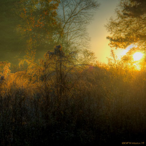 morning sunrise weeds nikon frost hdr lightroom postprocessing photomatix