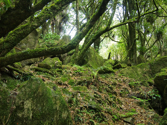 Trollshaw Forest in Piopio