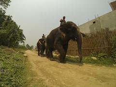 Bharatpur, Nepal