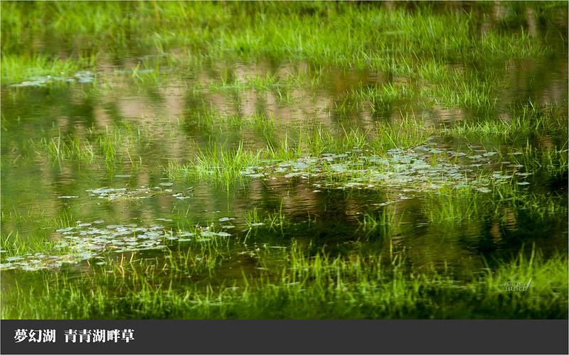 夢幻湖青青湖畔草