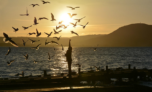 new sunset sun lake bird love beach water silhouette landscape person bay pier spring rotorua sundown seagull gull jetty sunny mount zealand plenty ngongotaha kurdulija