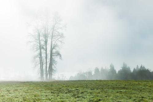 morning autumn tree nature fog canon landscape foggy lee treescape autumnfog morningfog gnd fogrollingin ef2470mmf28l lakestevens graduatedneutraldensity leefilters canon5dmkii 5dmkii