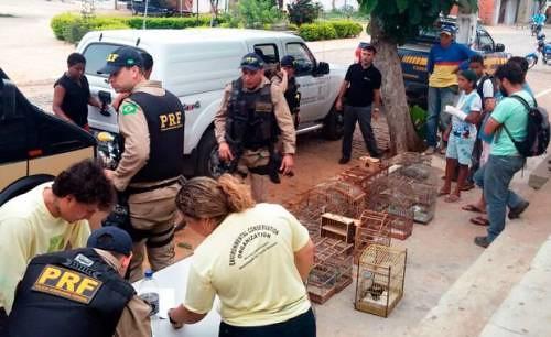 Operação integrada apreende 870 animais silvestres; 9 foram presos