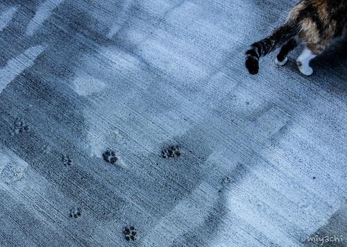 【232-234日目】島民より猫が多い猫の島。青島へ(愛媛)