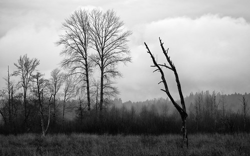 trees blackandwhite nature monochrome clouds landscape washington moody overcast pacificnorthwest canonef100400mmf4556lisusm nisquallynationalwildliferefuge canoneos5dmarkiii johnwestrock