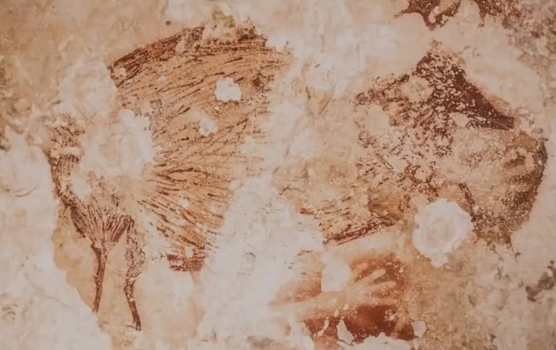 Animal depiction and hand stencil paintings found in one of the caves at Sulawesi. This is a video still shot from video shown below from Nature.com