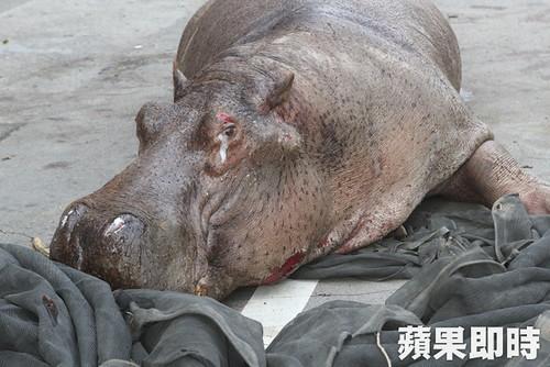 跳車重傷的阿河趴倒在路邊流淚。圖片引自蘋果日報