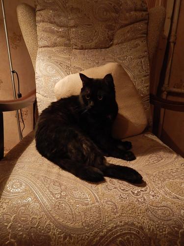 кот в кресле вечером вертикально