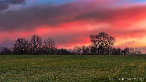 trees alberi sunrise dawn alba campagna prati pianurapadana beppeverge