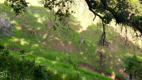 Palo Alto's Foothills Park