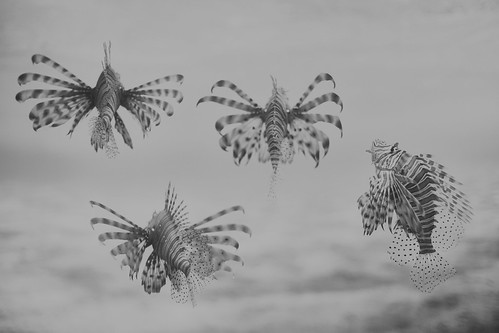 Pteroinae