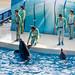 150216 Enoshima Aquarium-21.jpg