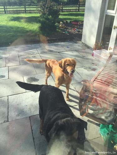 [Reunited] Sat, Oct 15th, 2016 Found Male Dog - Bansha, Tankerstown, Tipperary