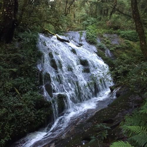 nature kew waterfall trail mae pan doiintanon เส้นทางศึกษาธรรมชาติกิ่วแม่ปาน