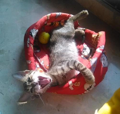 """8º Concurso fotográfico: """"Como gato panza arriba"""" 15350410513_1a72bbb2bb"""