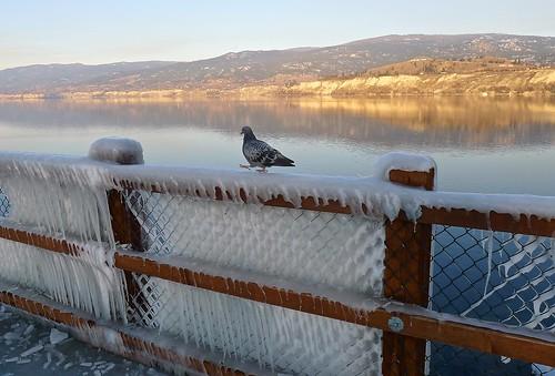 sunset sun lake canada bird ice landscape britishcolumbia okanagan pigeon panasonic penticton okanaganlake lx5 nigeldawson dmclx5 jasbond007 copyrightnigeldawson2014