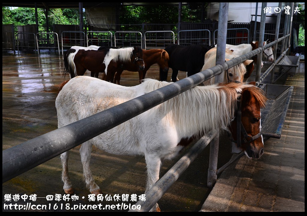 樂遊中埔─四季好咖‧獨角仙休閒農場DSC_3835